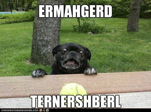 He He Funny Animal Memes Derp Dogs Funny Dogs