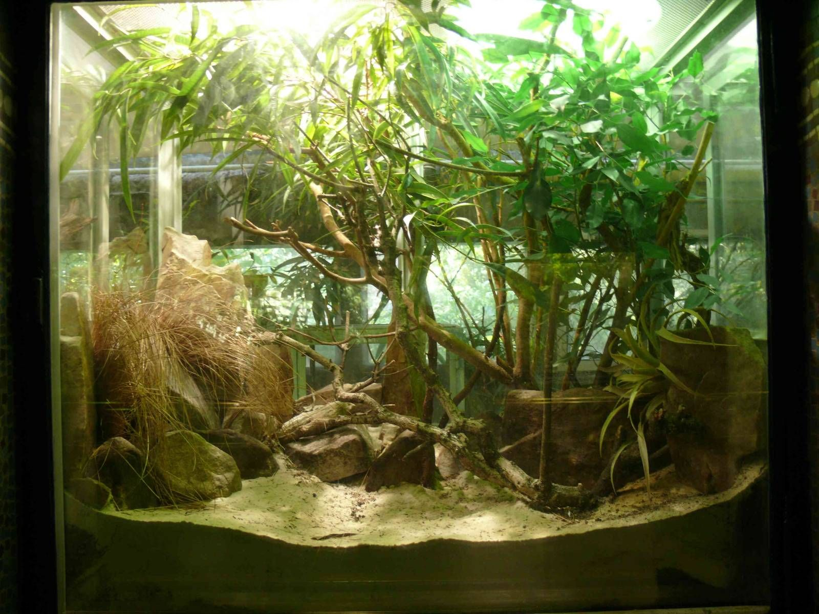 Terrarium common chameleon terrarium inside the vivarium jardin