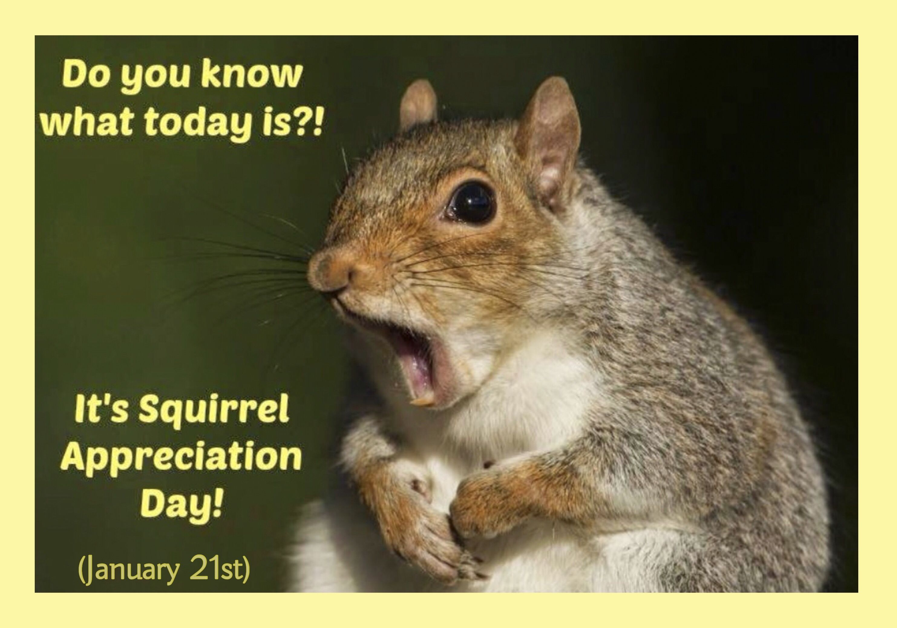 Squirrel Appreciation Day January 21 National Day Calendar Squirrel Appreciation Day Animal Facts Alternate Animal Names