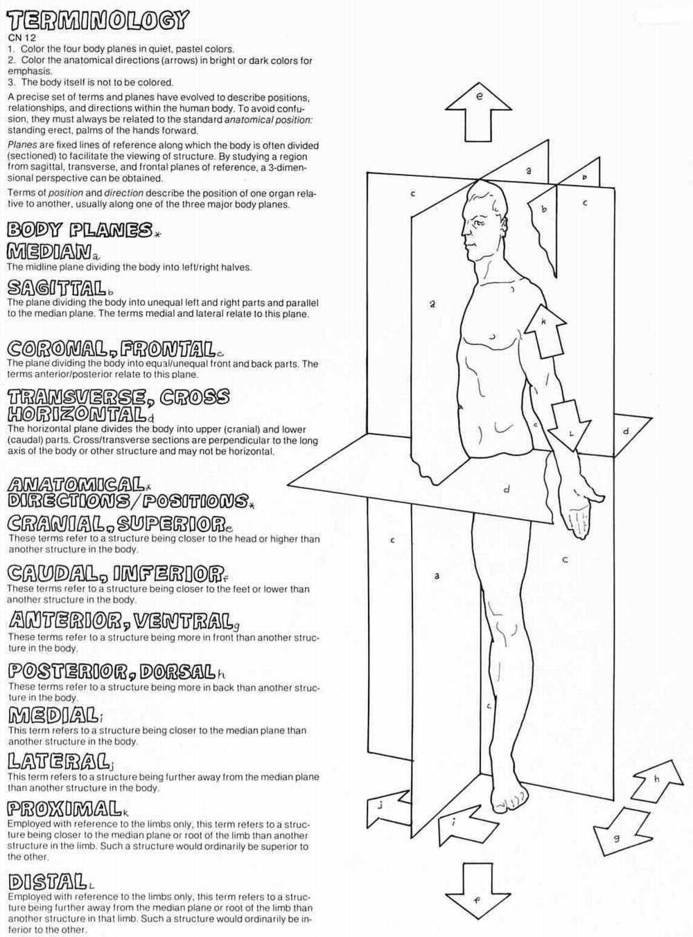 Printables Anatomical Directions Worksheet directions worksheet davezan anatomical davezan