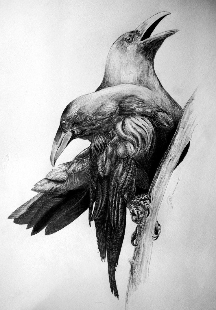 cde807ef4cb0b crow with 2 heads | Tattoos | Crow tattoo design, Crows drawing ...