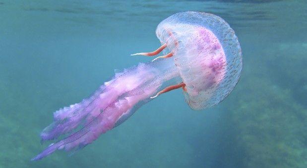 meduse.jpg (619×340)