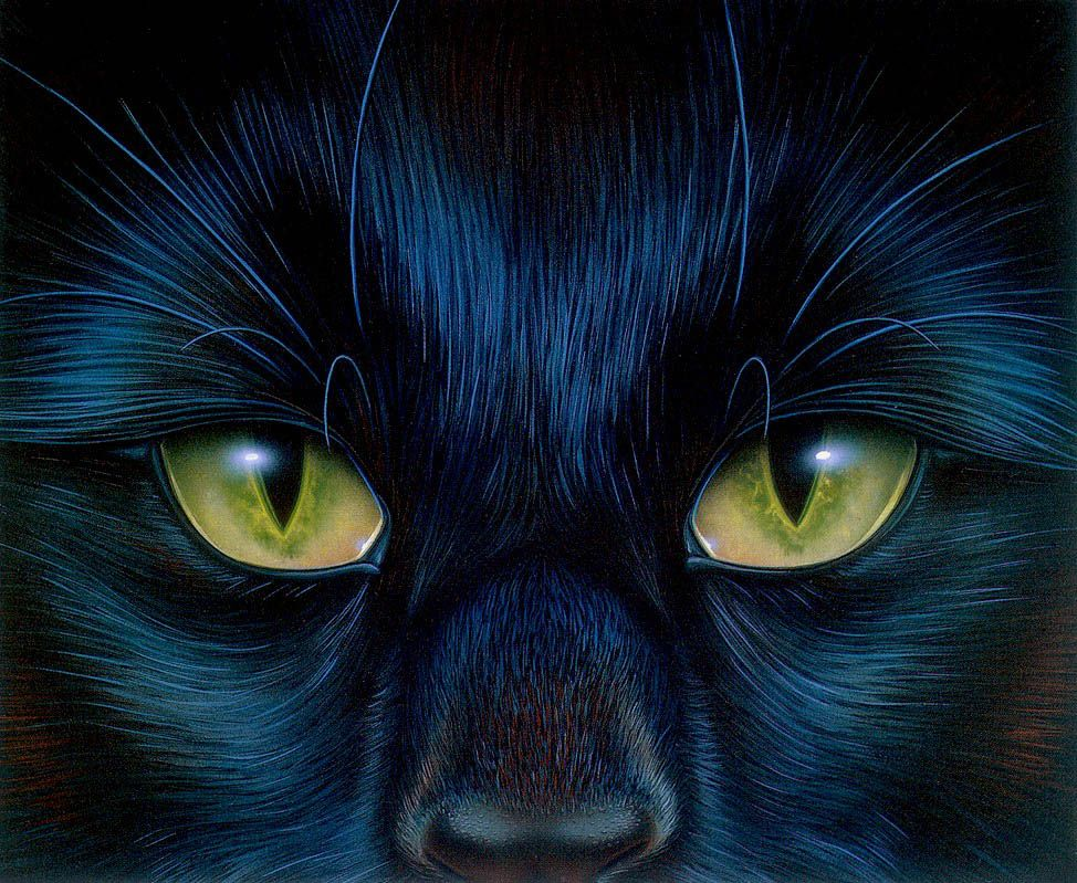 Cat eyes painting by Barclay Shaw.
