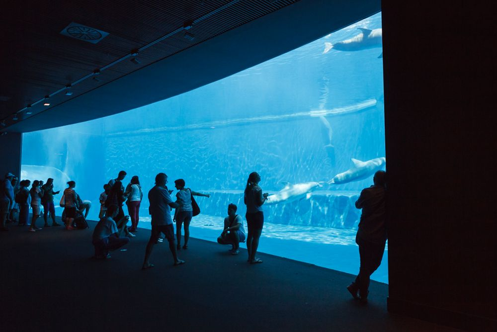 Acquario Di Genova With Images Old Port Tourist Attraction Genoa