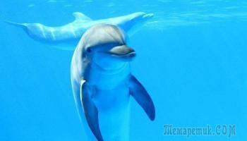 Моя встреча с дельфинами в море | Дельфины, Животные