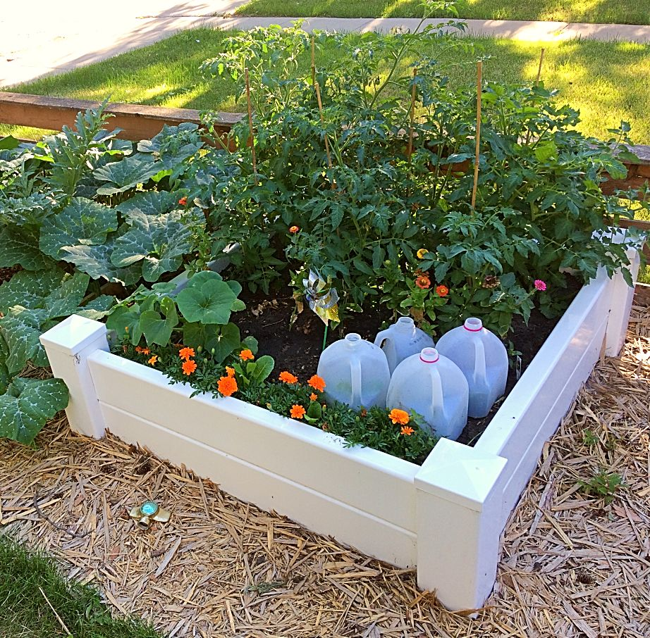 A Good Raised Garden Bed Idea For A Vegetable Garden. It