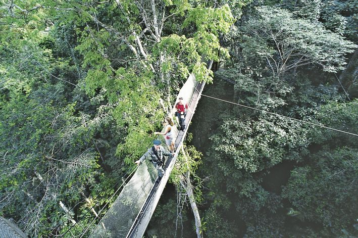 This is the canopy walkway at the ACTS one of the lodges of Explorama near Iquitos & This is the canopy walkway at the ACTS one of the lodges of ...