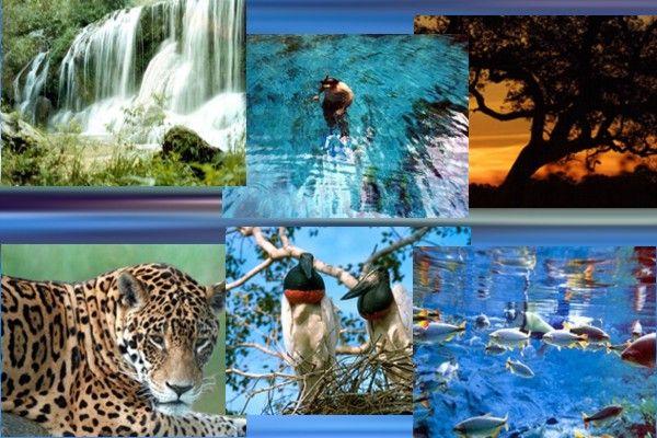 Cuaiba Mt Pontos Turisticos Brasil Pantanal Mato Grosso Ponto Turistico