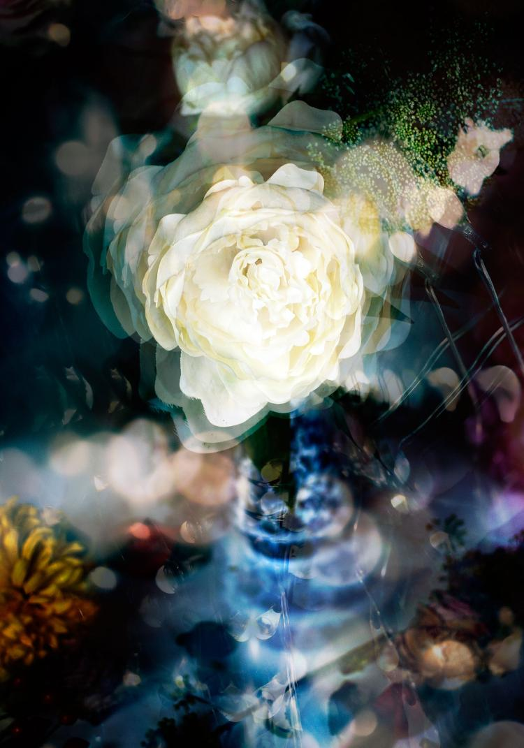 Belgian photographer Isabelle Menin creates dreamy, unique flower portraits using reflecting pools of water, emphasizing rich colors and abstract qualities in her digital photographs.