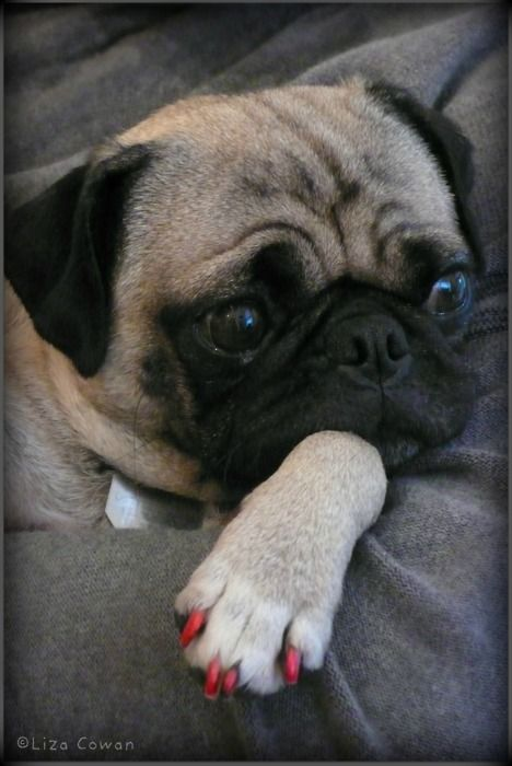 Saki C Liza Cowan All Rights Reserved Pugs And Kisses