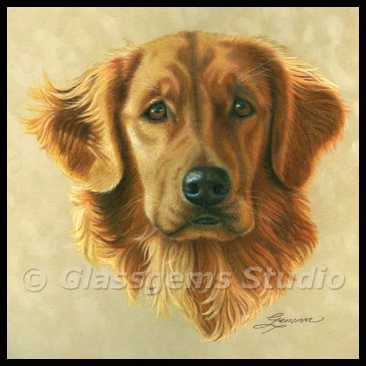 Colored Pencil Painting Golden Retriever Colorful Drawings