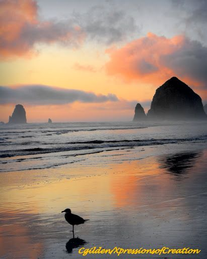 Here is another photo of my favorite beach along with a beautiful sunset and seagull. One of my favorite moments to photograph.