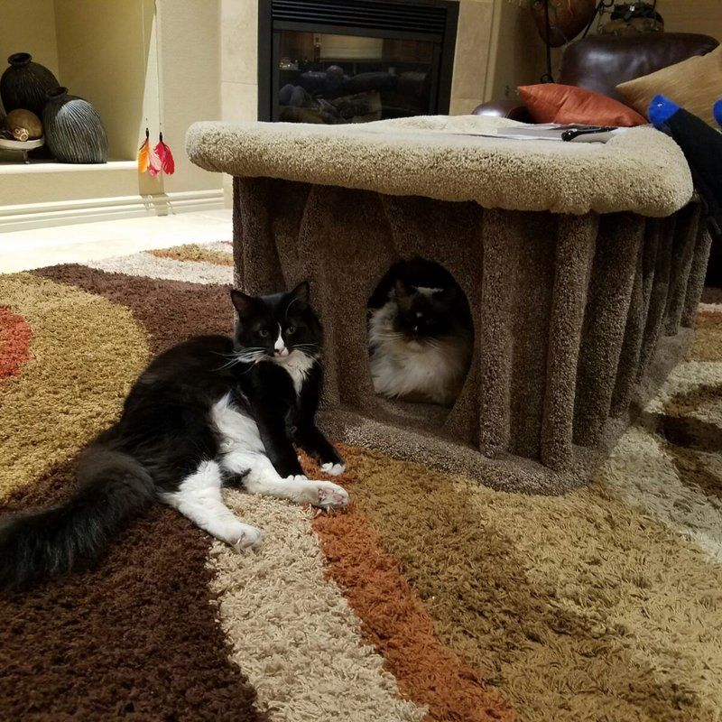 18 Cat Condo Cat Condo Wood Cat Cat Stairs