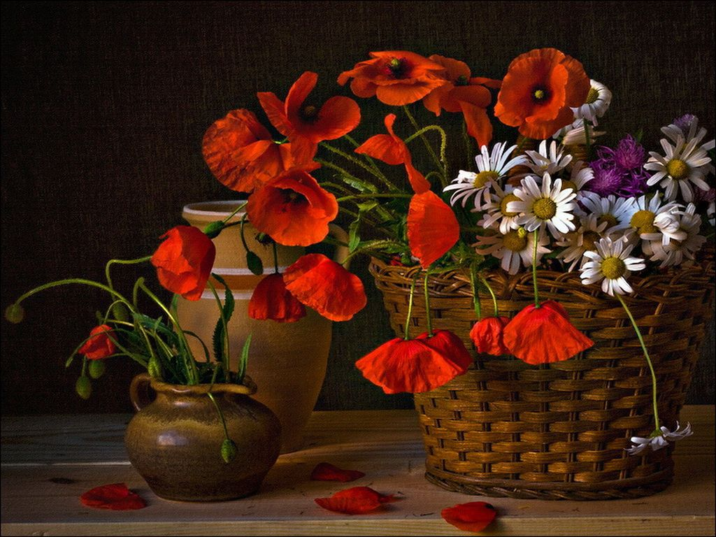 Poppies. Bouquet. Still life