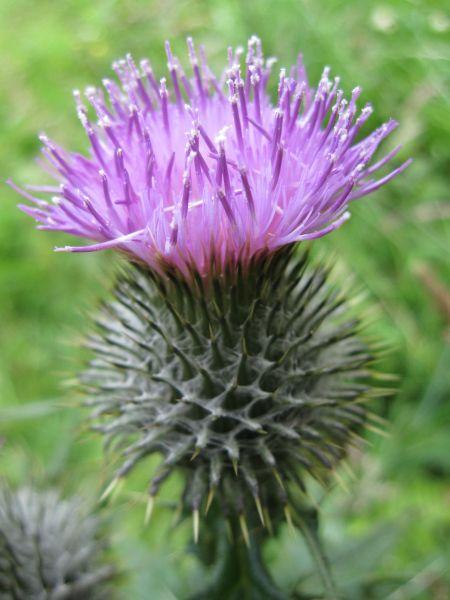 Nostalgia In Scottish Wild Flowers Flowers Scottish Flowers Wild Flowers