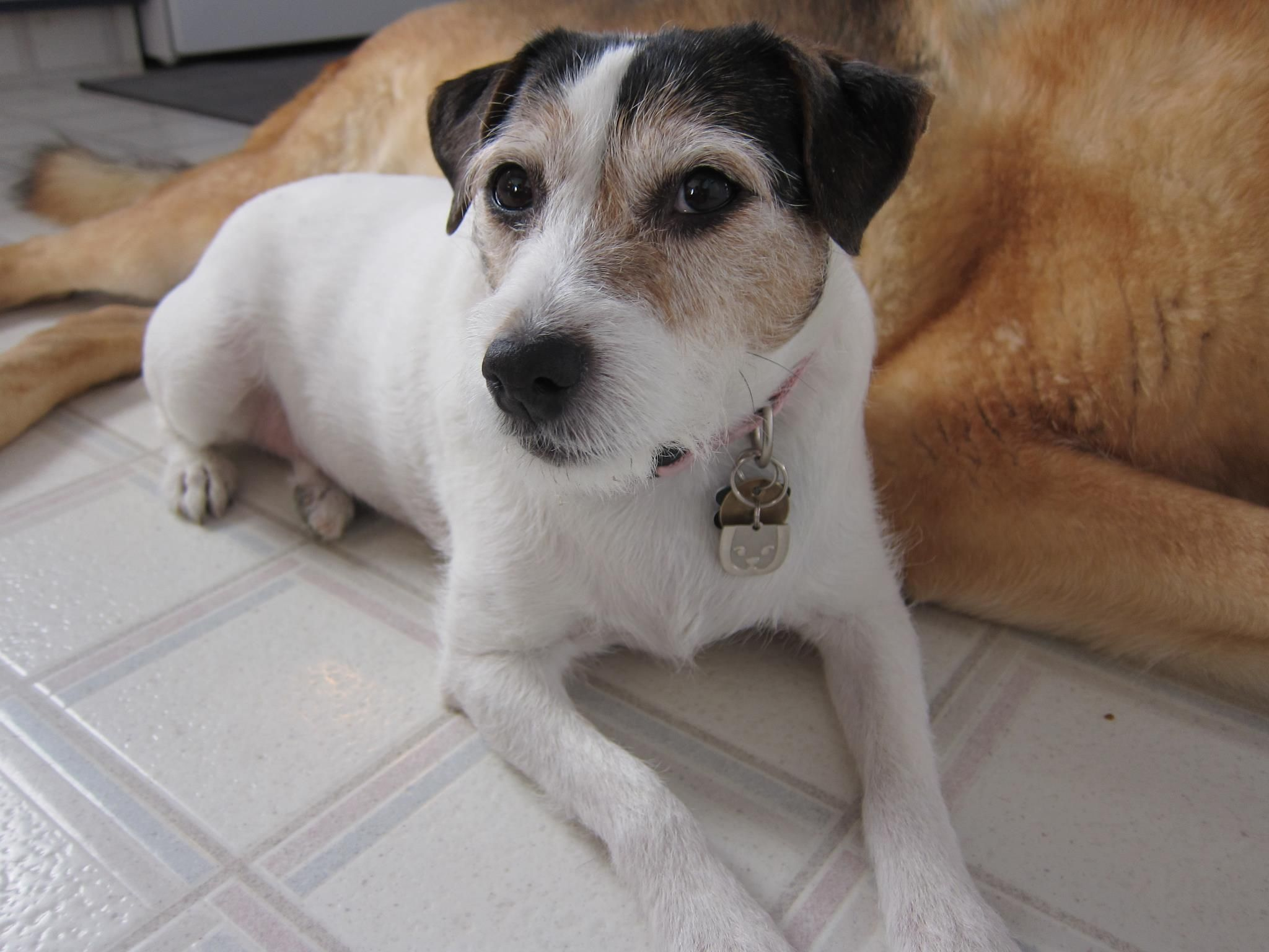 Zoey Is A Trupanion Dog Who Is Currently Being Helped For Her