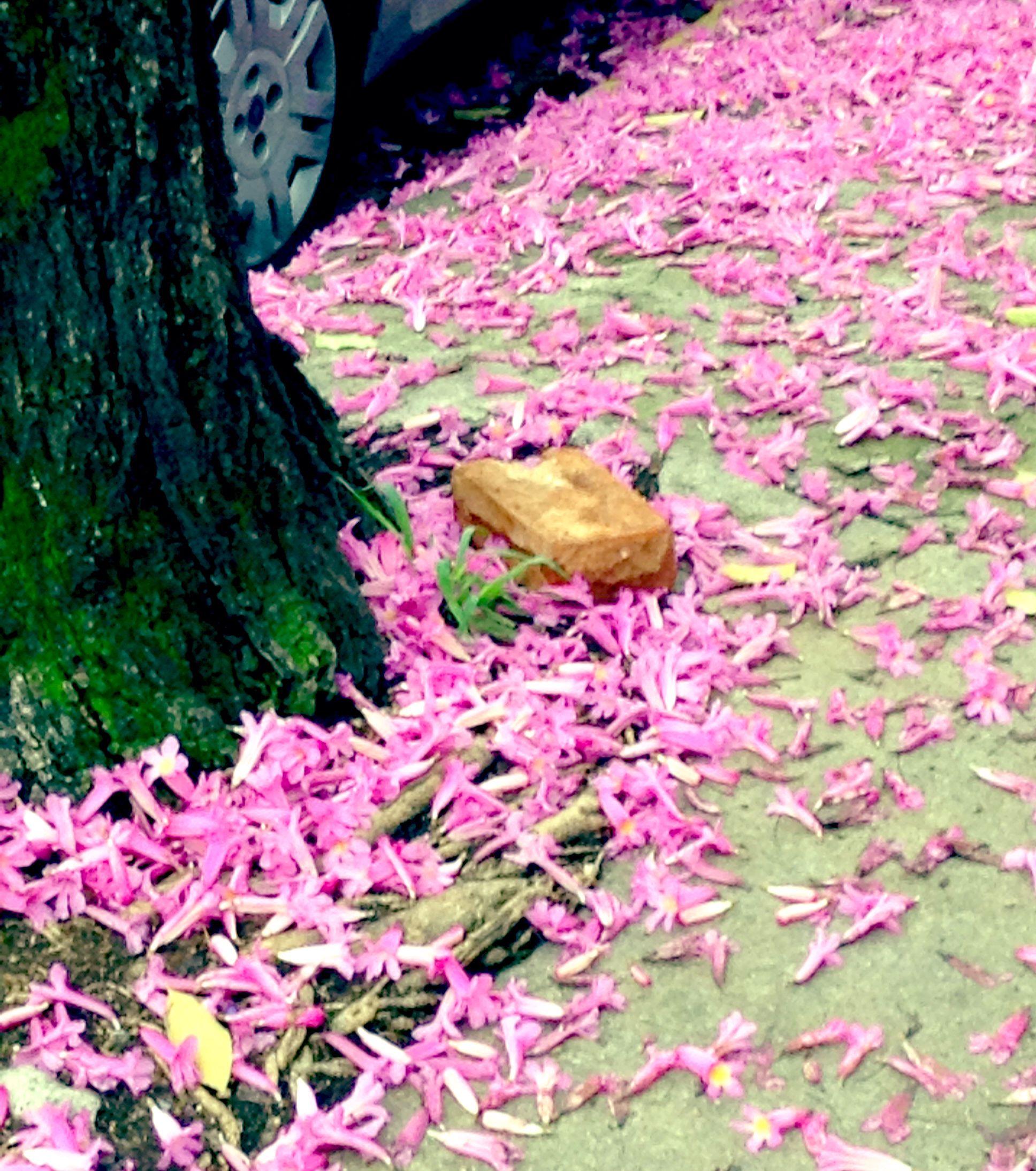 Flores na rua