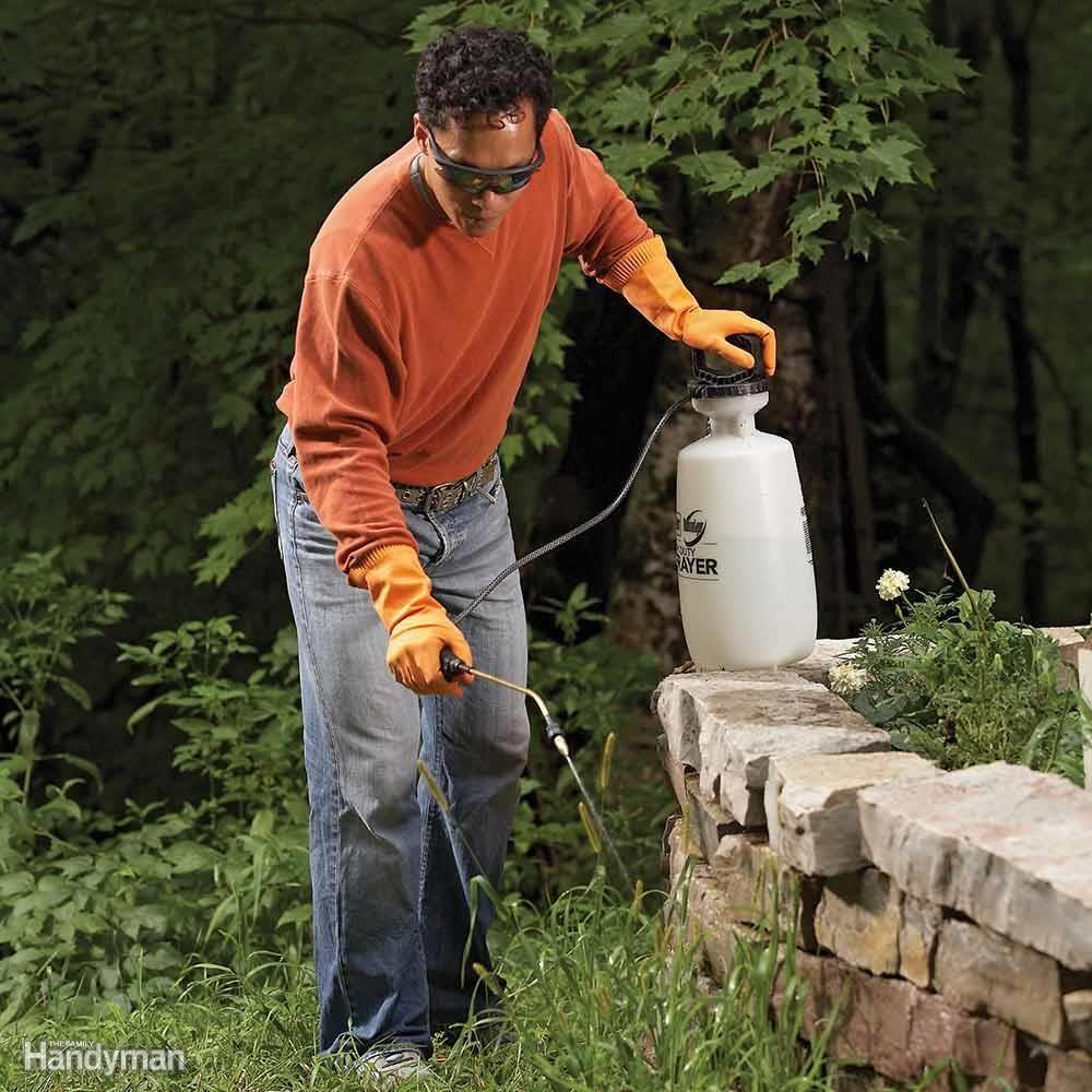 670eb9bb6fc03f2fd6212df4381ca5e3 - Expert Gardener Weed And Feed Liquid