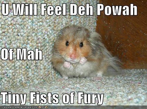 tiny fists of fury Animal jokes, Cute hamsters, Funny