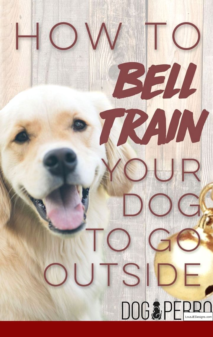 How To Train Your Dog To Go To Bathroom Outside And Pics Of How To Train Your Dog To Not Bark Dog Clicker Training Dog Training Obedience Easiest Dogs To Train