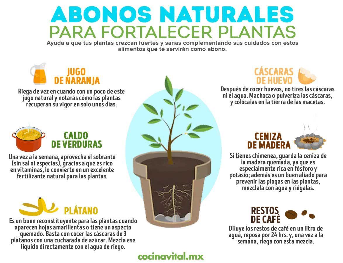 6 Abonos Naturales Que Ayudarán A Fortalecer Tus Plantas Abono Natural Para Plantas Cultivo De Plantas Abonos Para Plantas