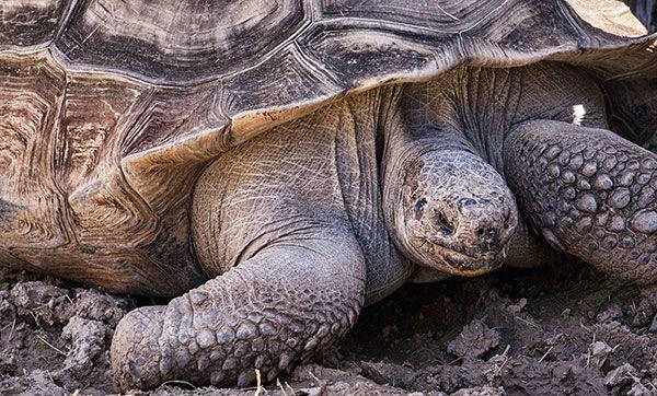Pin On Turtles Tortoise