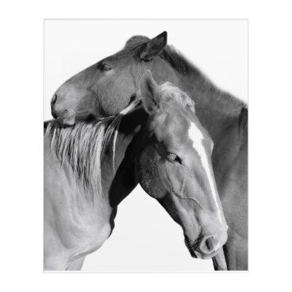 Black Horse Equine Photography Black And White Acrylic Print