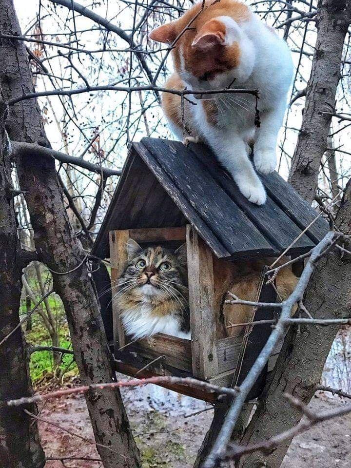 #birdhouses