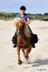 Denmark Horse Plans! Daily riding tours by the North Sea in the Vigsø Bugt-area using 1. class Iceland ponies. The tours are individually divided according to the participants' skills. Small teams.    Bathing tour to Vigsø  Riding in the dunes by the sea  Sunset riding   3 day tour Hanstholm-Bulbjerg - full board included.