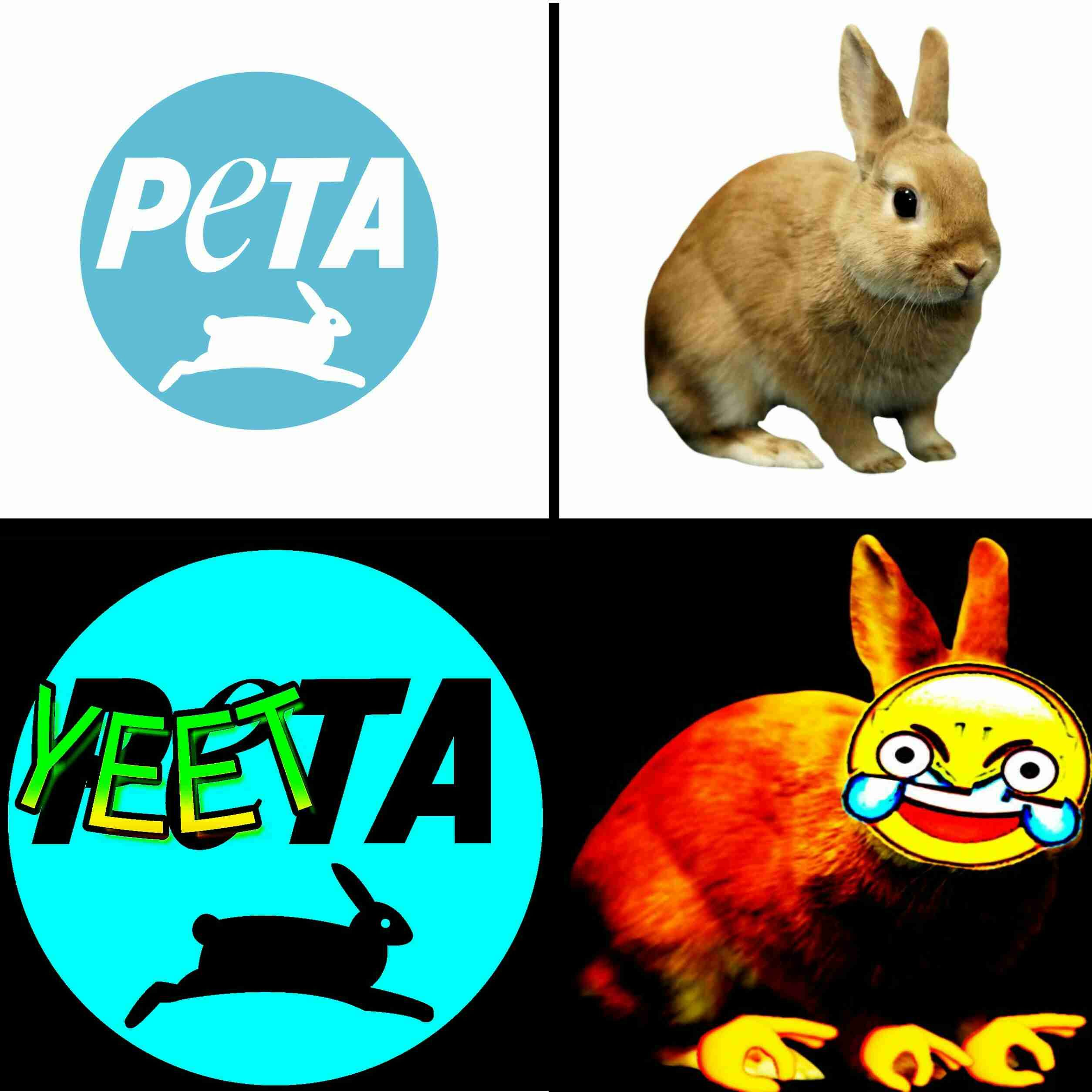 They Support Yeets Funny Memes Dankest Memes Old Memes