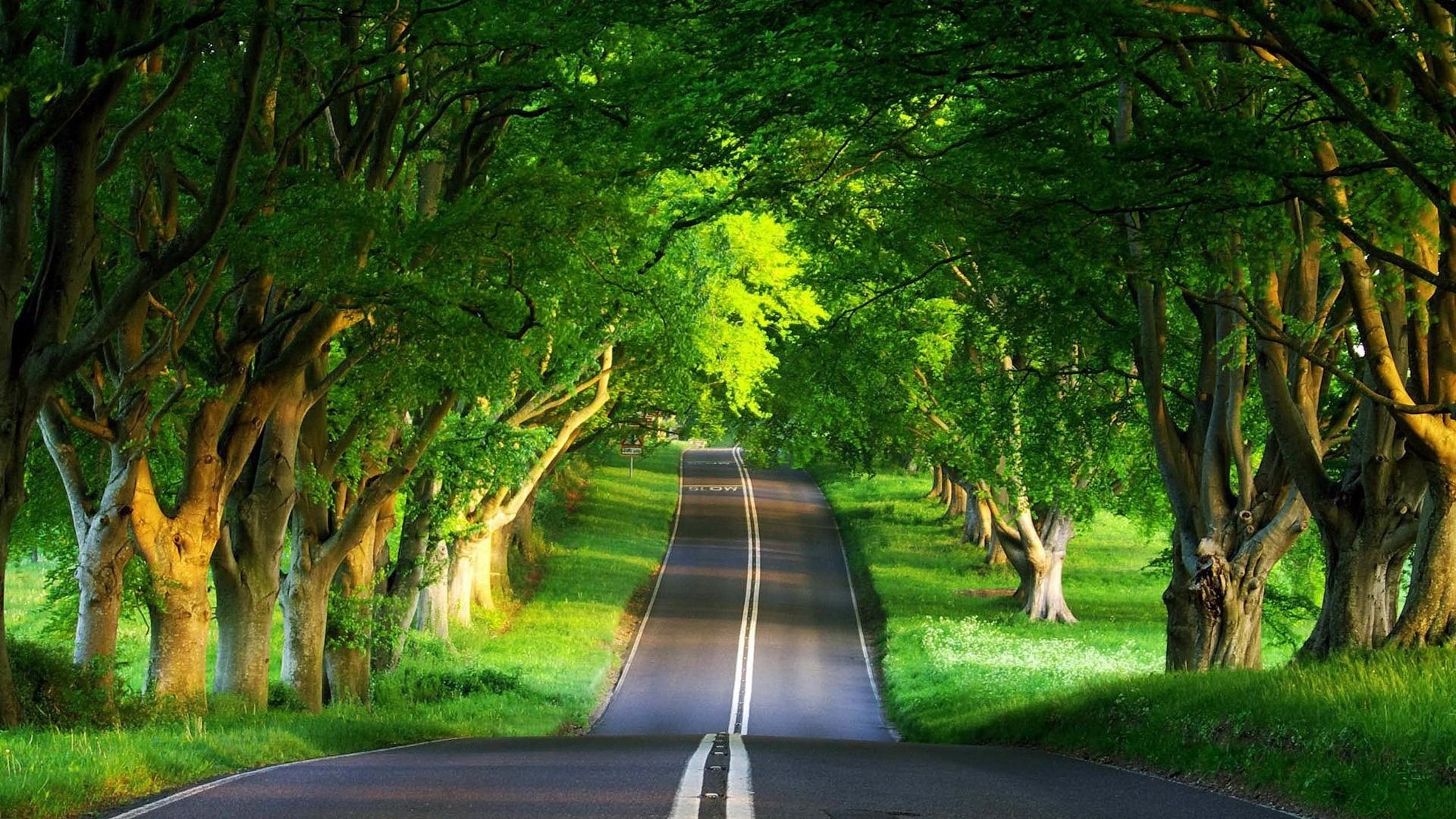 Road Under The Trees Wallpaper Nature Desktop Wallpaper Hd Nature Wallpapers Nature Desktop
