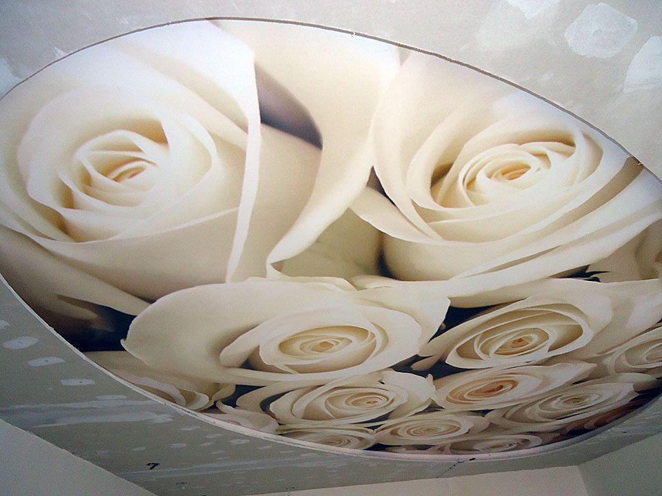 календари сотрудницами натяжные потолки с розами фото лазил
