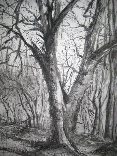 Winter Trees Oakbank 57x40cm Charcoal, Graphite .jpg 400×533 ...