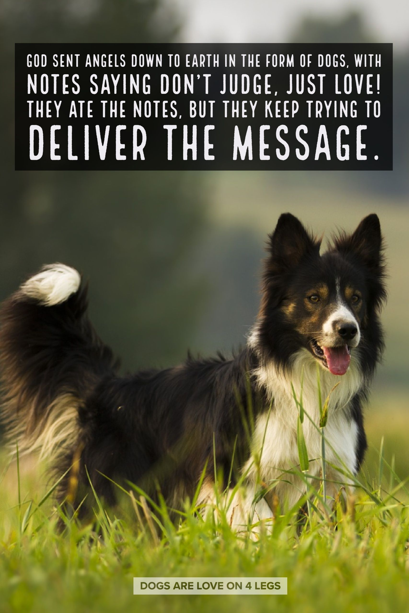 Dog Quote God Sent Angels Down To Earth Dog Dog Quotes Inspirational Quotes Funny Quotes Life Quot Dog Quotes Dog Quotes Inspirational Dog Quotes Funny