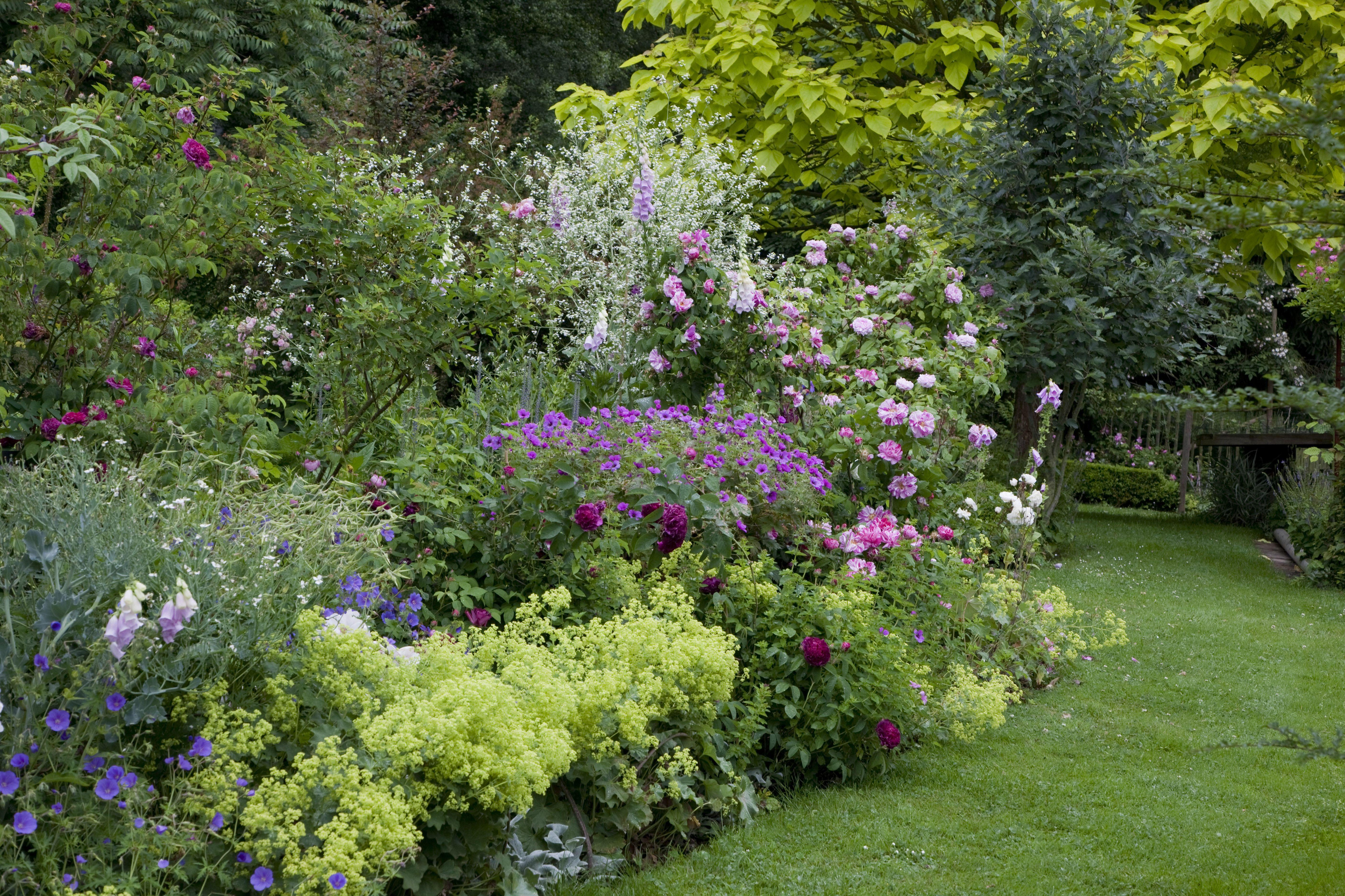 5 vivaces couvre-sols à longue floraison qu'il faut avoir ...