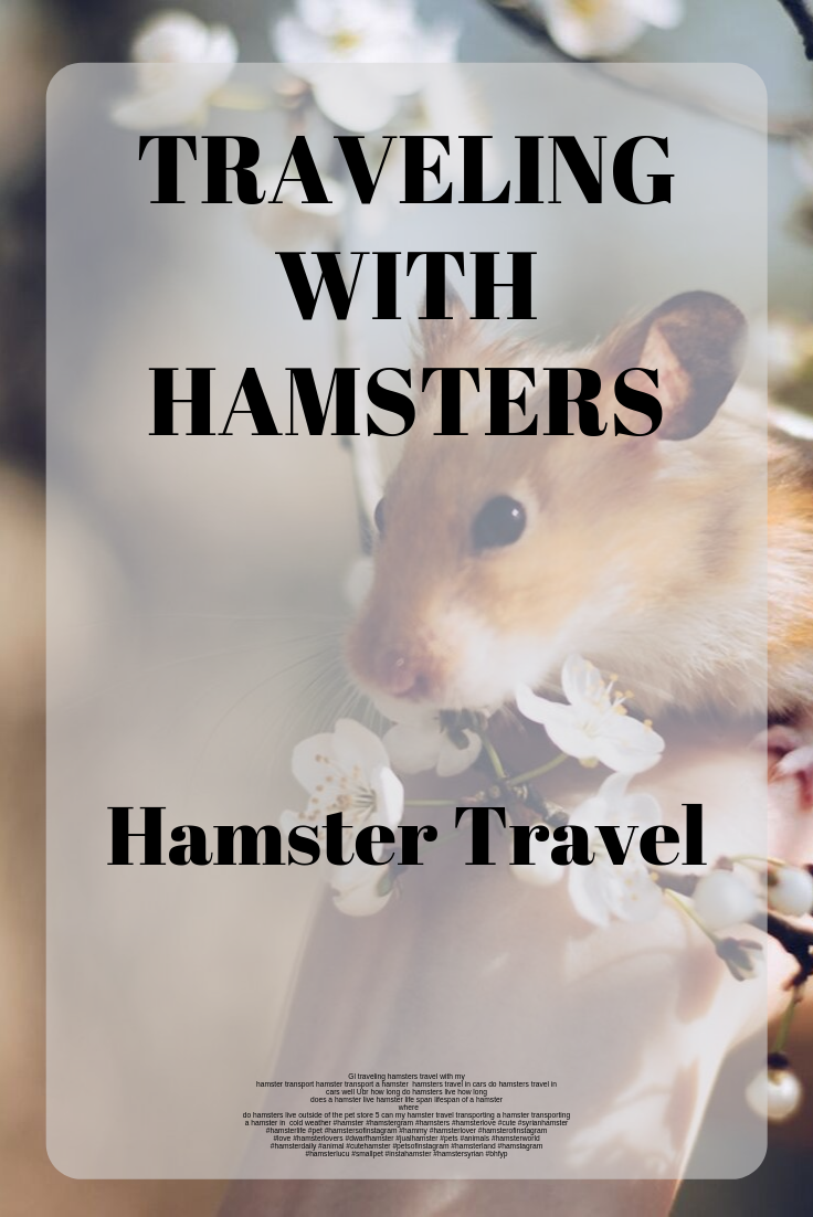 Traveling With Hamsters How To Travel With A Hamster How To Transport A Hamster Hamster Life Hamster Hamster Live