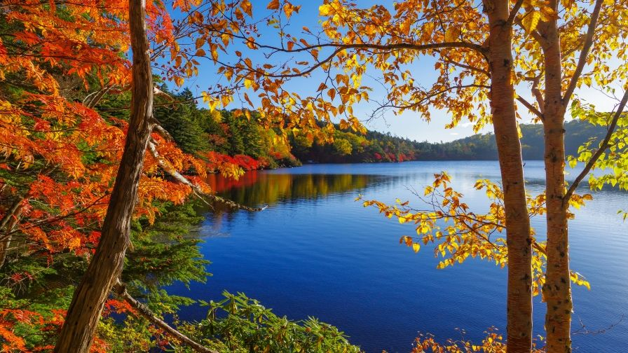 Nature Autumn Lake Hd Free Download Wallpapers Autumn Lake Autumn Nature Autumn Trees