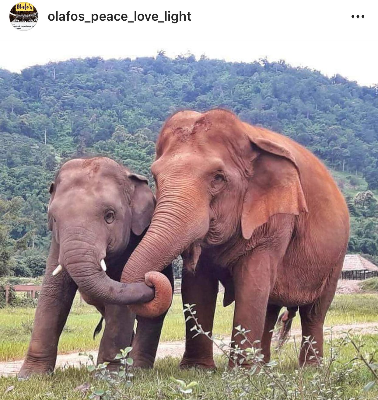 Husband Wife Elephants Holding Trunks 3 Animals Beautiful