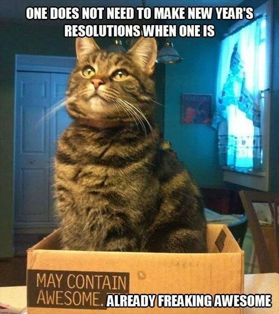 These Cats Are All Ready For 2020 New Year S Resolutions Memes Funny Cat Memes Funny Cat Pictures Cat Parenting