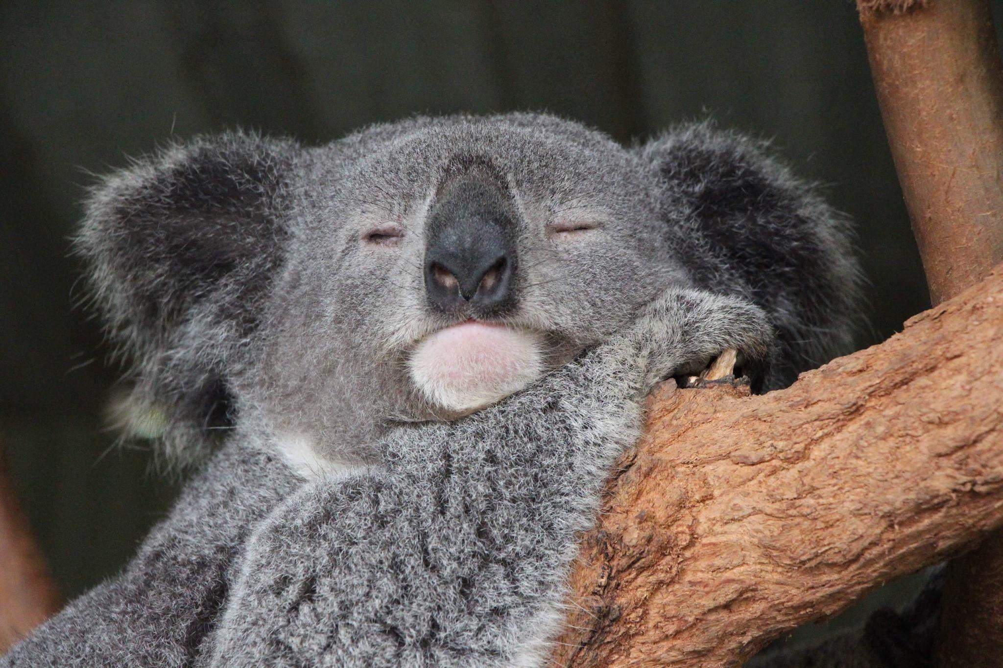 Visit Featherdale Sydney Wildlife Park on your trip to Blacktown in 2020 | Wildlife park. Wildlife. Wildlife tour