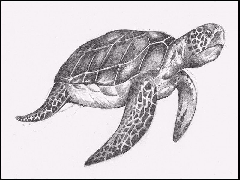 Inspirational Turtle Pencil Drawing | Sea turtle drawing ...