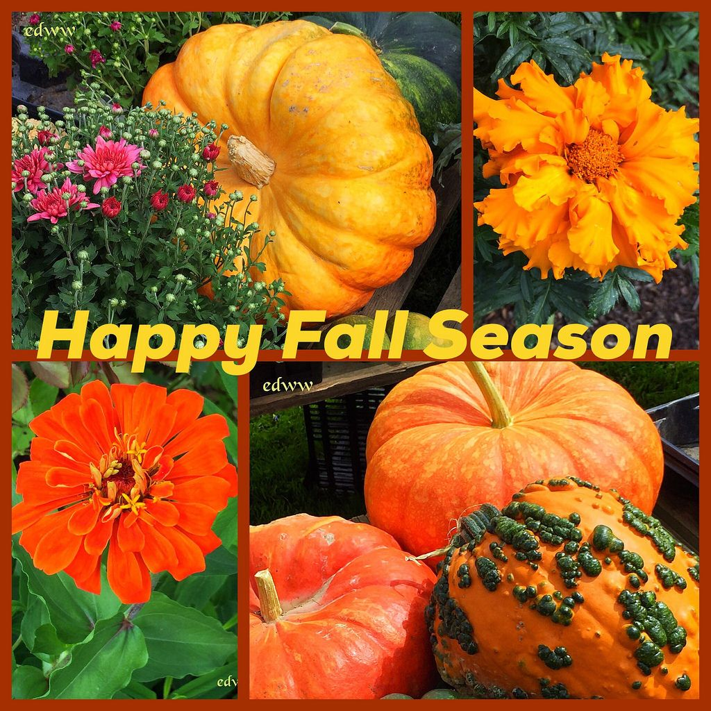 Happy fall season season greetings pinterest happy fall happy fall season m4hsunfo Image collections