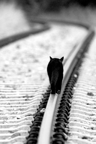 Katze In Schwarz Weiss Cat Monochrome Schwarze Katze Katzen