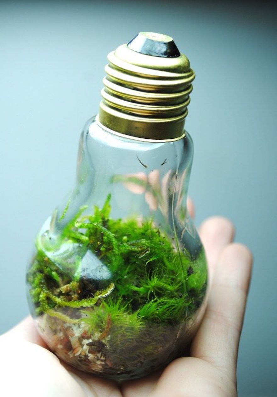Little ecosystem objet détourné pinterest light bulb and bulbs