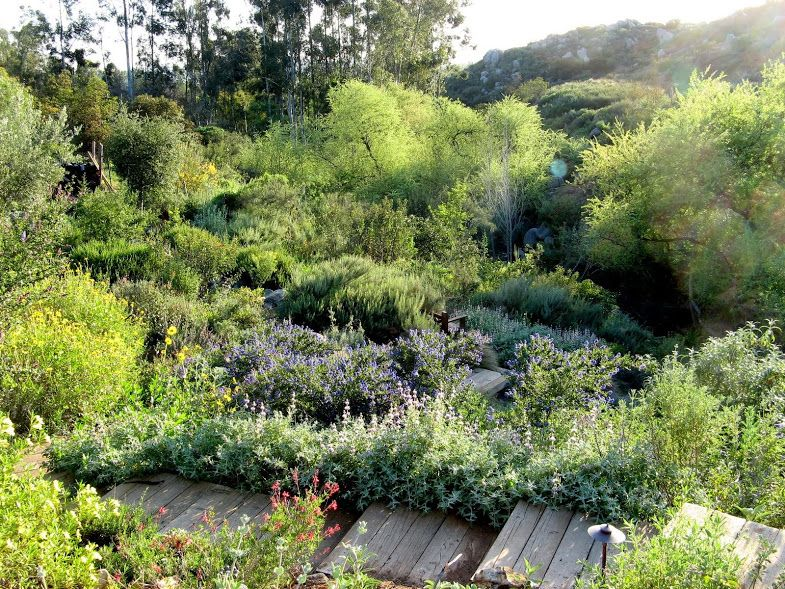 california native plants for the garden. An Inspiring California Native Plant Garden Tour Of San Diego Resident Dennis Mudd\u0027s 6 Acre Property. Plants For The O