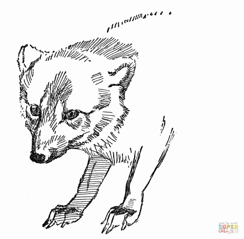 Arctic Fox Coloring Page New Face Arctic Fox Coloring Page In 2020 Fox Coloring Page Cat Coloring Page Arctic Fox