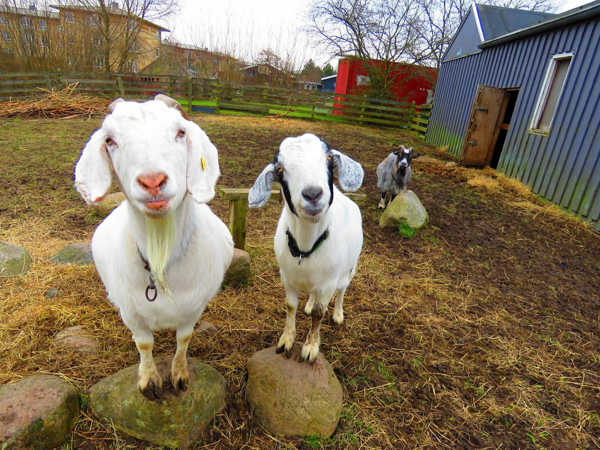 12+ Berry farms animal hospital ideas