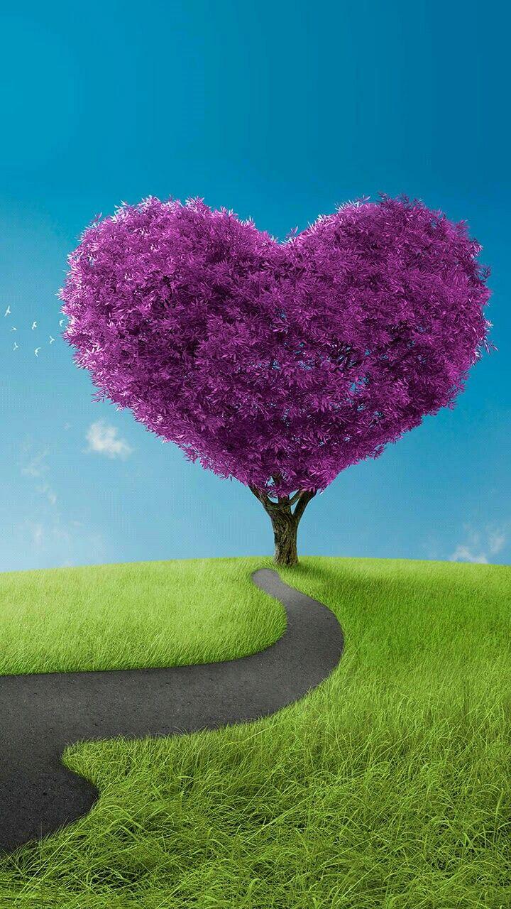 Epingle Par Stephanie R Hill Sur Amazing Nature Coeur En Photo Photos Paysage Fond Ecran Paysage