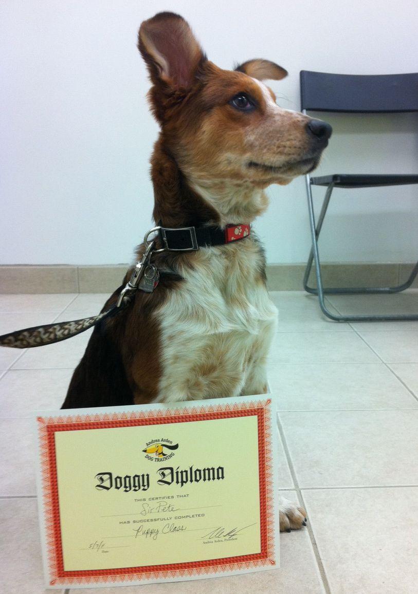 Canine Nose Work Fitness Yoga Seminars Nyc Dogs Dogfitness