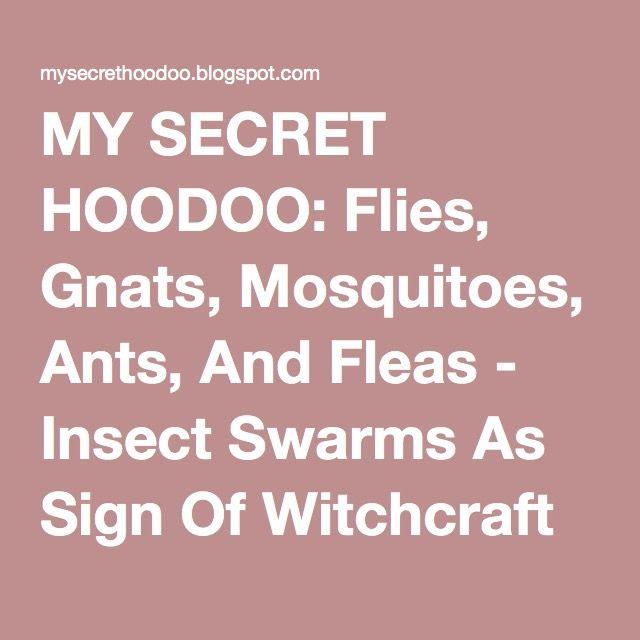 MY SECRET HOODOO: Flies, Gnats, Mosquitoes, Ants, And Fleas